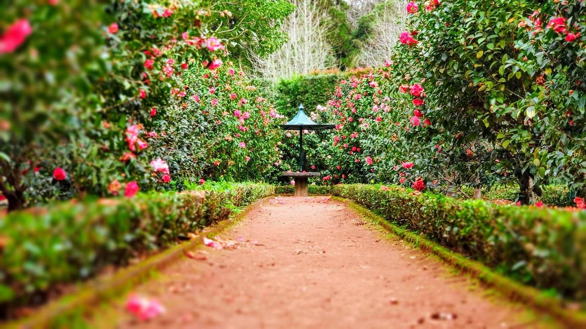 5 tips om je tuin prachtig en in topconditie te houden